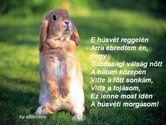 HÚSVÉTIIDÉZETEK VERSEK.KÉPEK Happy Easter, Lol, Funny, Animals, Quotes, Wise Words, Drawing Drawing, Eyes, Happy Easter Day