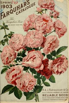 Farquhars garden annual 1913 3 Vintage Plant Seed