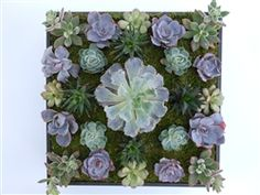 Beautiful Succulents Featured In Living Wall Art Truffles