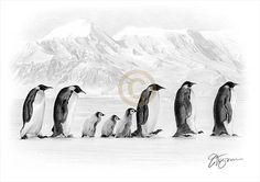 Penguin artwork - pencil drawing print - wildlife art - artwork signed by artist Gary Tymon - 2 sizes - Ltd Ed 50 prints only - penguin art Penguin Drawing, Penguin Art, Animal Drawings, Pencil Drawings, Art Drawings, Drawing Art, Watercolor Bird, Beautiful Drawings, Animation