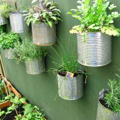 des plantes aromatiques mises en pots dans des boîtes en conserves en métal accrochées sur un mur de bois peint en vert