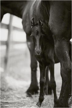 New Foal - May he be loved and protected.
