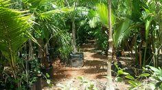 Vivero la caribeña en merida yucatan ...gran variedad de palmas