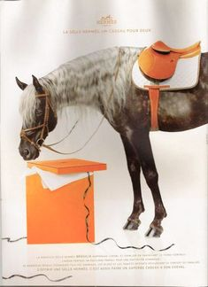 Even ponios know which are the best labels to shop for ~ Hermes. All The Pretty Horses, Beautiful Horses, Hermes Orange, Equestrian Chic, Horse Fashion, Hermes Paris, Horse Photography, Fashion Photography, Horse Girl