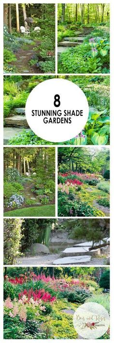 Shade Gardens, How to Grow a Shade Garden, Shade Garden Ideas, Landscaping Ideas, Backyard Landscaping, Backyard Landscaping Ideas, Backyard Gardening TIps and Tricks, Popular #lowmaintenancelandscapebackyard