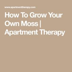 How To Grow Your Own Moss   Apartment Therapy