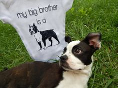 My Big Brother is a Boston Terrier Combine your love for both you two legged and four legged baby with this Boston Terrier baby clothing. Our dog baby clothes make the perfect dog lover gift for any expectant momma!