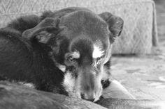 Divine Old Dog. Frieda
