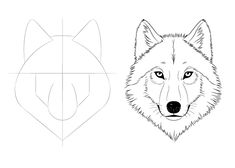 How to draw a wolf face & head step by step · orange drawing tutorial Wolf Head Drawing, Wolf Drawing Easy, Wolf Sketch Easy, Cool Wolf Drawings, Anime Wolf Drawing, Pencil Art Drawings, Drawing Sketches, Easy Sketches To Draw, Drawing Ideas