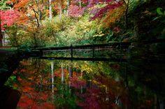 Green Yellow Red by Sakashi Yui on 500px