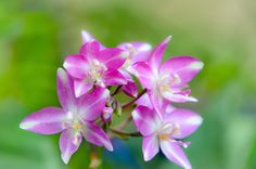 Spathoglottis Orchids. Macro photo by kdho13 http://rarme.com/?F9gZi