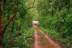 One of the major Orissa wildlife sanctuaries, the Kuldiha Wildlife Sanctuary is home to rare species of animals and plants. The Kuldiha Wildlife Sanctuary in Orissa spreads across an area of 272.75 square kilometers. For more details@ http://shakuntalanivas.com/kuldhia.html