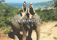 ride an elephant #bucketlist