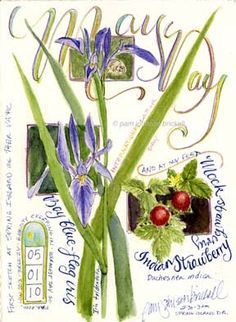 illustrated journal images and text about South Carolina lowcountry flora and fauna