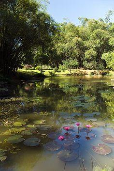 1986 - The Royal Botanical Garden, Peradeniya, Kandy, Sri Lanka Best Places To Travel, Places To See, Beautiful Islands, Beautiful Places, Beautiful Pictures, Sri Lanka Holidays, Public Garden, Landscape Photos, Asia Travel