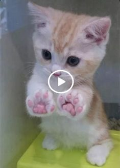 1 million+ Stunning Free Images to Use Anywhere | soniv.xyz Cute Kittens, Cute Baby Animals, Funny Animals, Animals Dog, Funny Cat Compilation, Videos Funny, Compilation Videos, Gato Gif, Funny Cats And Dogs