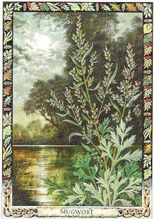 Druid plant oracle: mugwort
