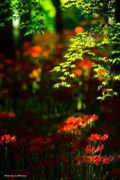 東京カメラ部 New:Akira Shimizuvhvkubvb I'll Iphone Background Images, Light Background Images, Studio Background Images, Photo Backgrounds, Blur Background Photography, Blur Photo Background, Picsart Background, Nature Photography, Green Nature