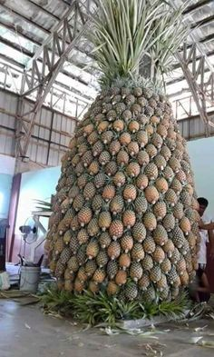 Easy To Grow Houseplants Clean the Air You Can Never Have Just One Pineapple, Or Can You? Fruit Plants, Fruit Garden, Vegetable Garden, Big Pineapple, Pineapple Express, Fruit And Veg, Fruits And Vegetables, Pineapple Wallpaper, Palmiers