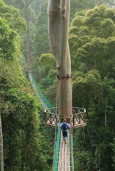 Borneo Rain Forest, Conopy Walkway.