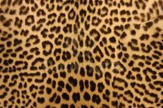 One can never have too much leopard print...!!!!!!!!!!!!!!!!!!!