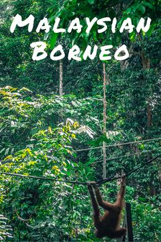 Are you trying to plan and budget for a trip to Malaysian Borneo? Do you want to dive, climb mountains, and see Orangutans? This is not the most popular (or crowded!) country to travel in Southeast Asia, but it is totally worth it for the wildlife alone! There's much more to be discovered... Click for full budget info.