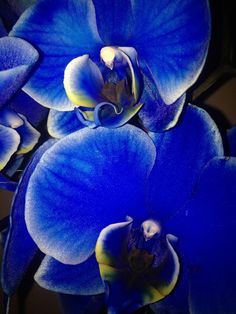 Blue orchids by Kaia Huus - Photo 41908004 - Macro Pictures, Blue Orchids, Rose, Flowers, Plants, Painting, Art, Pink, Roses
