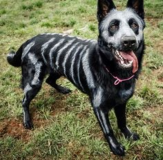 Pin for Later: 15 of the Best DIY Halloween Dog Costumes Out There Skele-Dog
