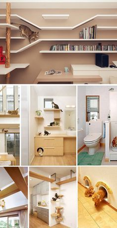 20 Creative Indoor Cat Playground Ideas - Home Design Lover - 20 Creative Indoor Cat Playground Ideas Why don't you make your home cat-friendly? If you are having doubts about that, check the Creative Indoor Cat Playground Ideas below. Cat Playground, Playground Ideas, Indoor Playground, Playground Design, Cat Wall Shelves, Cat Climbing Shelves, Cat House Diy, Diy Cat Tree, Cat Perch