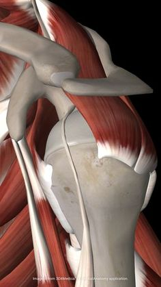"The Rotator Cuff Says, ""Don't Do This Exercise!"""