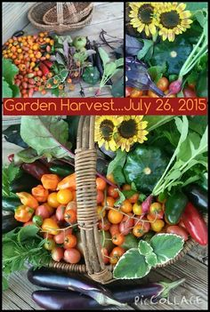 To learn about an easier way to garden, visit www.gardenanywherebox.com