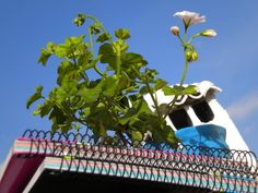 Foto 5. Aprender bajo un cielo azul