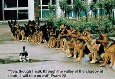 Cat walking through the valley of the shadow of death | Christian Funny Pictures - A time to laugh