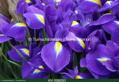 """Color!!  Check www.tuinschilderijen.nl and hit the botton """"flowers"""""""
