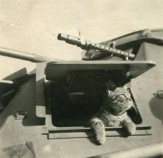 German Tankcat