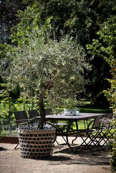 If you have room, olive trees are a beautiful Mediterranean accent with their ice toned leaves. LOVE the container though.