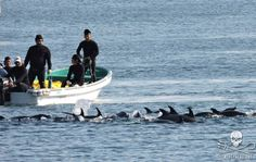 7 People Who Were Animals' Worst Enemies This Year:  Taiji dolphin fishers