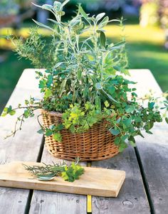 Homemade Herbal Teas: Kitchen herbs for your tea — such as basil, thyme, rosemary, mint, and oregano    Read more: Homemade Herbal Teas - Country Living