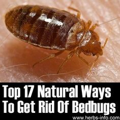 17 Natural Ways To Get Rid Of Bedbugs. By placing a Fabrictech OmniGuard® or PureCare® Total Encasement on your mattress, box spring or pillow, you will be able to effectively lock bedbugs out of your sleep system! http://www.fabrictech.com/allergen-a-bedbug-protection/bedbugs.html