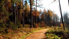 Leistruper Wald mit den Opfersteinen bei Detmold - www.lipperland.de