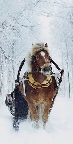 Dashing through the snow ...
