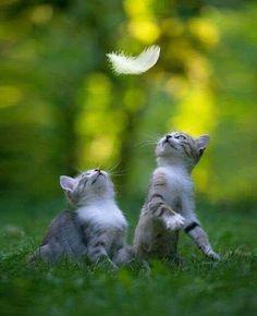 bonne et heureuse annee chatte tulsa chatte
