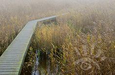 Mist in Drenthe. http://markrademaker.nl
