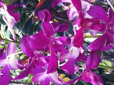 Orchids galore at the Hawaiian botanical garden