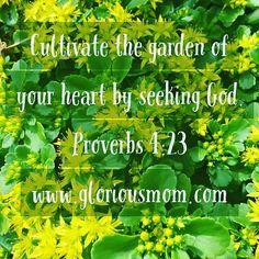#wellspring #heart #seekGod #walkintheSpirit #remainintheVine #God…
