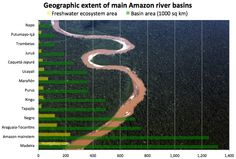 Major rivers in the Amazon Basin