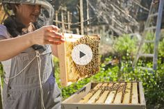 How to Be a Successful Beekeeper - To Bee or Not to Bee? | Mountain Feed & Farm Supply