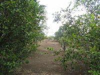 MPaniagua bienes raices: 0383001 Lote, Santa Eulalia, Atenas, Alajuela, Cos...