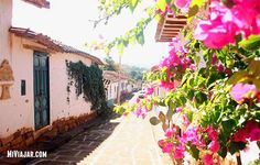 Colombia Travel, Plants, World, Barichara, Cities, Plant, Planets