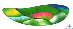 Схемы цветников в тени. 1. Лилейник лимонно-желтый - Hemerocallis citrina. 2. Бруннера крупнолистная  3. Страусник обыкновенный - Matteuccia struthiopteris. 4. Колокольчик широколистный — Campanula latifolia. 5. Медуница сахарная — Pulmonaria saccharata. 6. Астильба Арендса — Astilbe х arendsii. 7. Хоста Зибольда — Hosta sieboldiana.   Почва для такого цветника должна быть хорошо обработанной, рыхлой, богатой, но не переувлажненной. Рекомендуемые размеры цветника 4-4,5 м на 1,5-2 м.